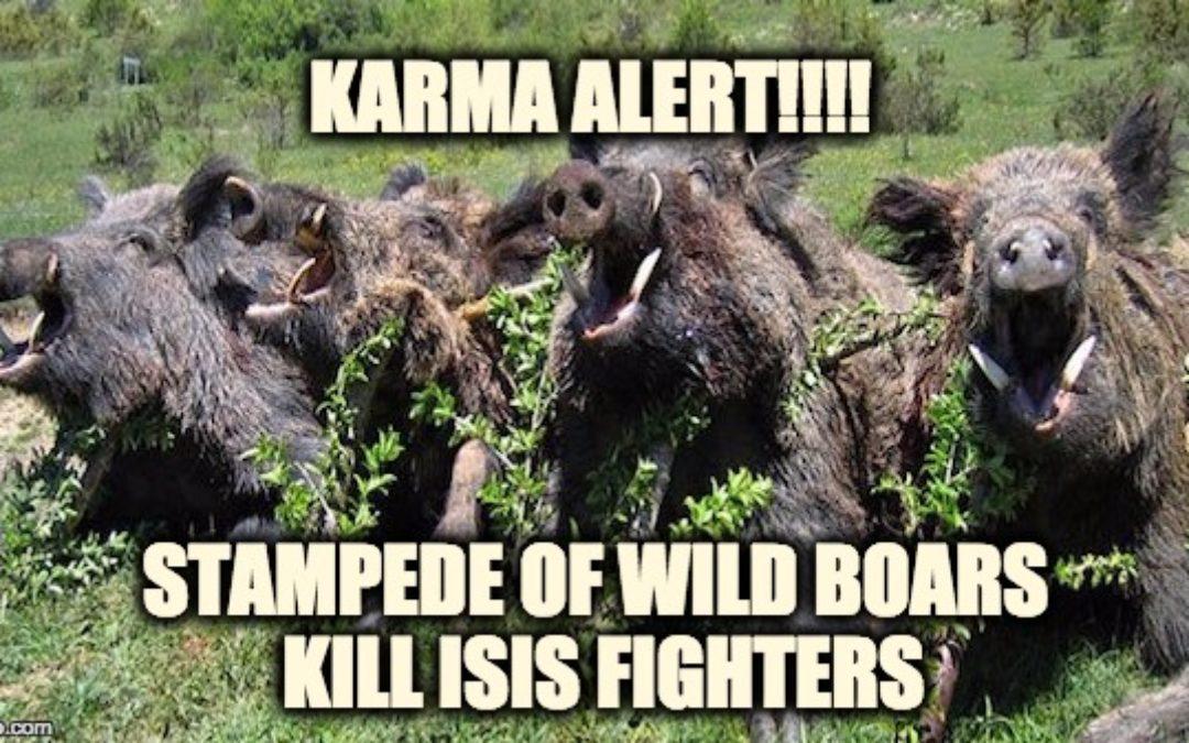KARMA ALERT!  ISIS Terrorists Killed By Stampede Of Wild Boars