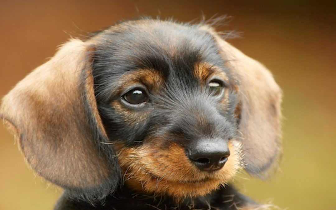 If Trump Picks A 'Liberal' For Supreme Court The Government Will Kill Cute Puppies