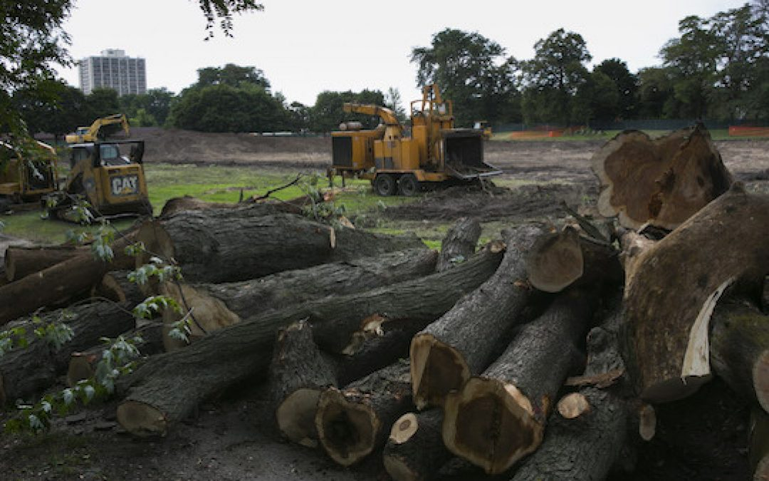 Obama's Latest Lie:  If You Like Your Century-Old Trees You Can Keep Them