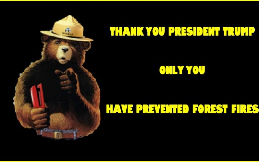 President Trump Totally Remakes U.S. Forest Policy To Decrease Forest Fires