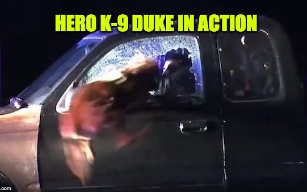 INCREDIBLE! K-9 Cop Leaps Through Broken Glass: Subdues Fugitive After Police Chase (Video)