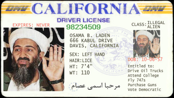 drivers licenses to illegals