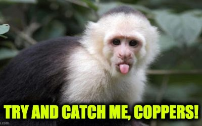 monkeys in India steal COVID-19