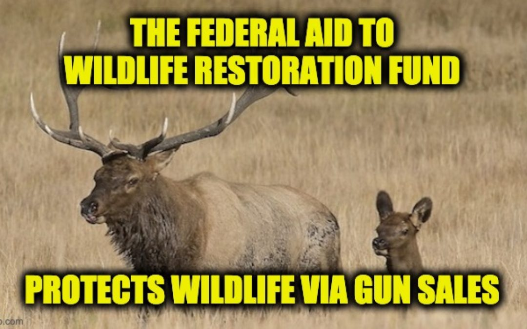 Wildlife Conservation Programs Funded 'Almost Exclusively' By Hunters, Gun Owners