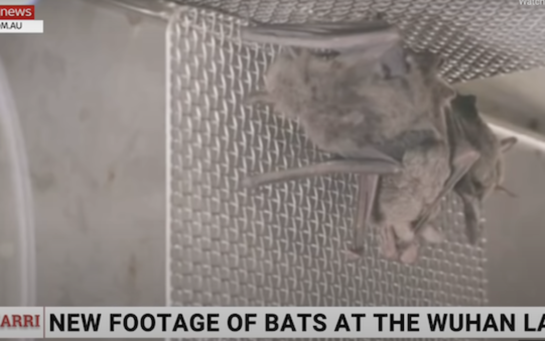 Newly Found Video Proves Wuhan Lab Kept Live Bats: WHO Investigation Wrong (Or Lied?)
