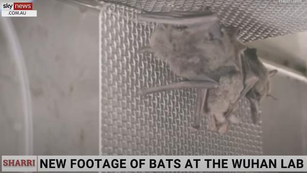 Wuhan Lab kept bats