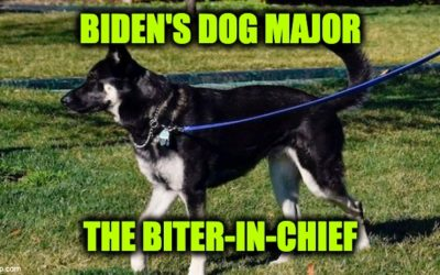 Biden's Dog Major Constantly Bit Secret Service Agents: Much More Than America Was Told