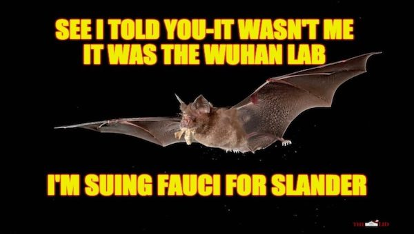 released coronaviruses Into bats